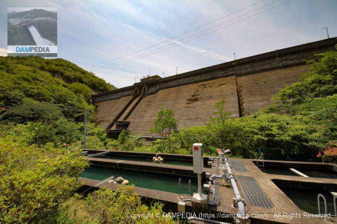 永楽浄水場の敷地内より堤体下流面を望む