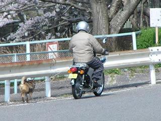 カブにリードで犬の散歩!?